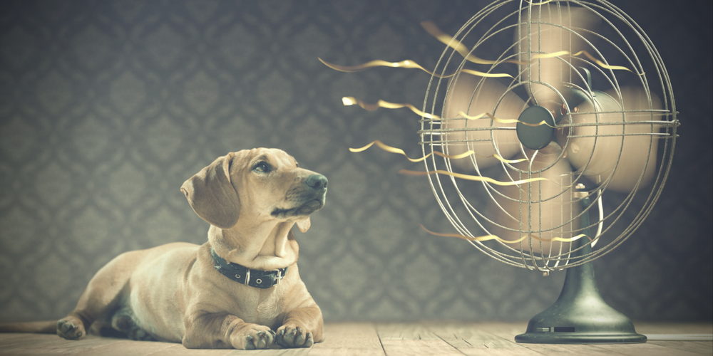 dog in front of fan - air conditioning installation